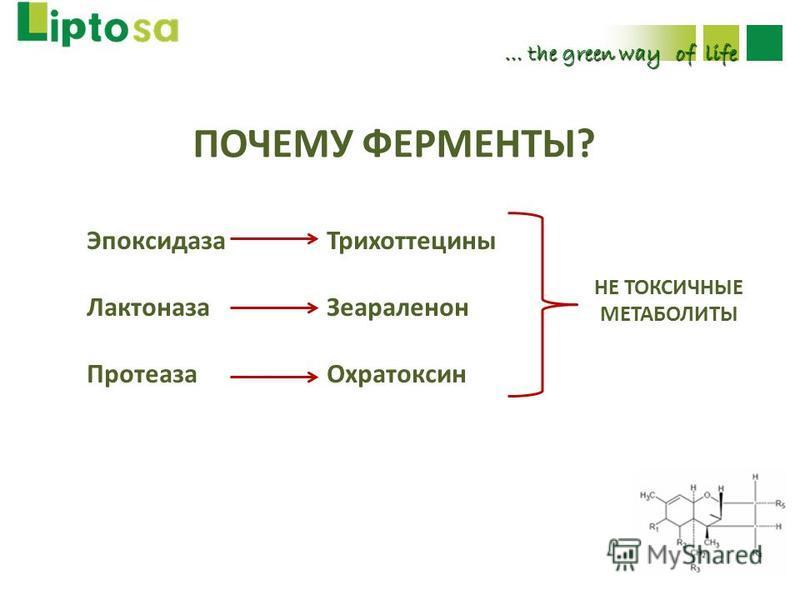… the green way of life ПОЧЕМУ ФЕРМЕНТЫ? Эпоксидаза Трихоттецины Лактоназа Зеараленон Протеаза Охратоксин НЕ ТОКСИЧНЫЕ МЕТАБОЛИТЫ