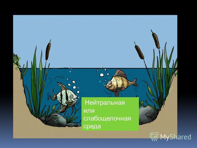 Нейтральная или слабощелочная среда