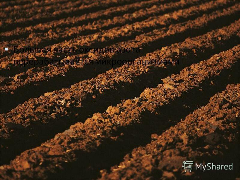 Большая часть оксидов азота перерабатывается микроорганизмами