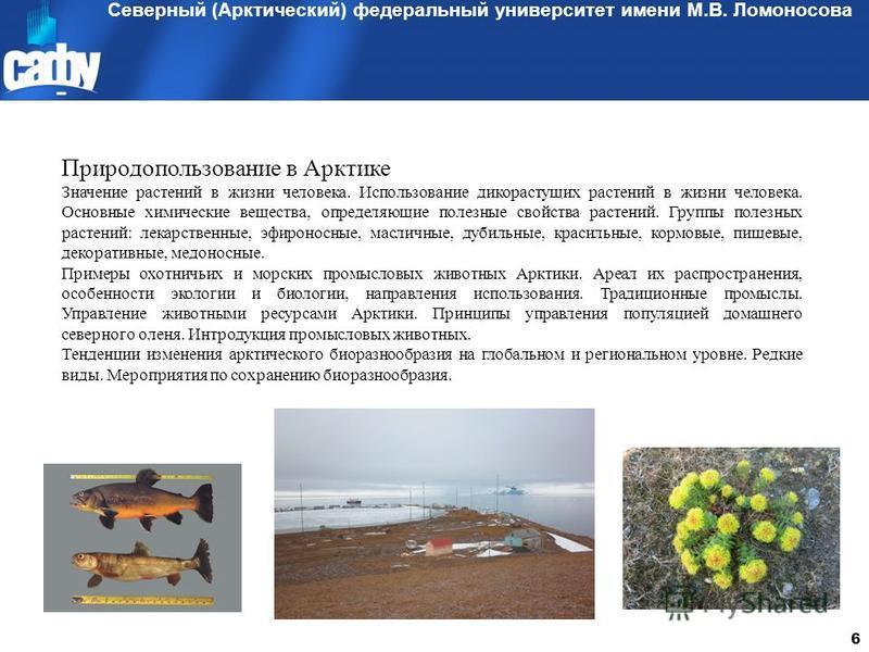 Северный (Арктический) федеральный университет имени М.В. Ломоносова 6 Природопользование в Арктике Значение растений в жизни человека. Использование дикорастущих растений в жизни человека. Основные химические вещества, определяющие полезные свойства