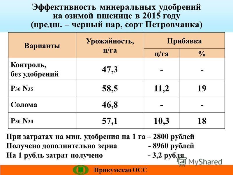 Эффективность минеральных удобрений на озимой пшенице в 2015 году (предш. – черный пар, сорт Петровчанка) Прикумская ОСС Варианты Урожайность, ц/га Прибавка ц/га% Контроль, без удобрений 47,3-- P 30 N 35 58,511,219 Солома 46,8-- P 30 N 30 57,110,318