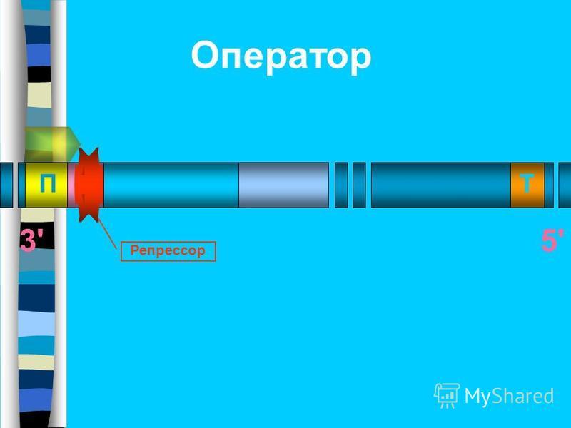 ПОТ 3'5'5' Репрессор Оператор