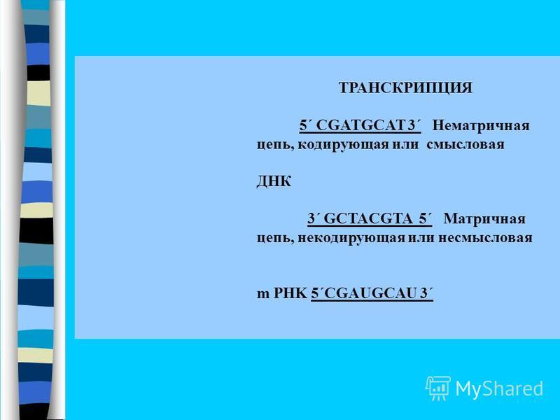 ТРАНСКРИПЦИЯ 5΄ CGATGCAT 3΄ Нематричная цепь, кодирующая или смысловая ДНК 3΄ GCTACGTA 5΄ Матричная цепь, некодирующая или не смысловая m PHK 5΄CGAUGCAU 3΄