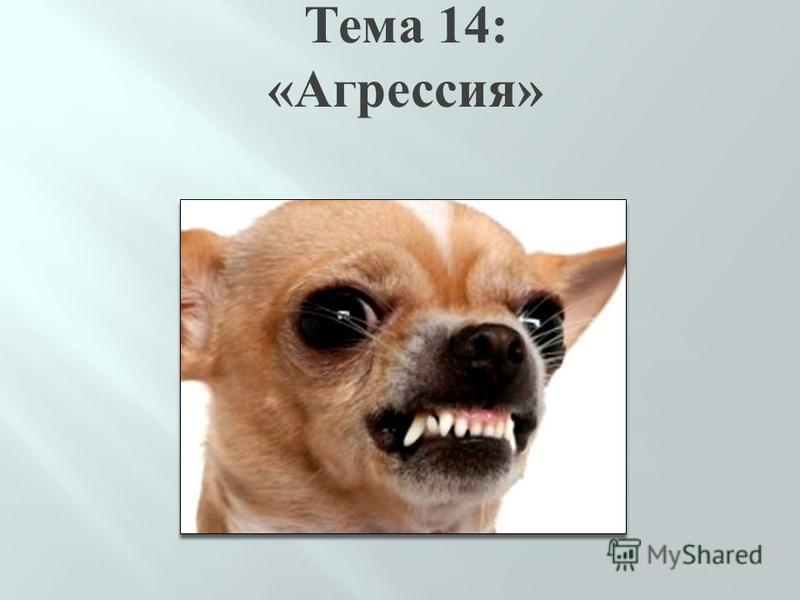 Тема 14: «Агрессия»