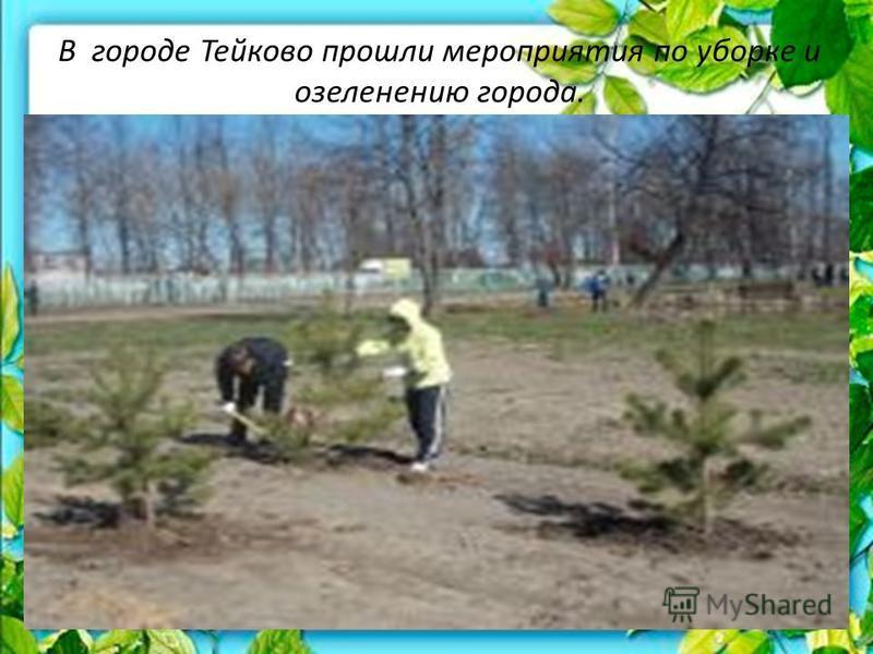 В городе Тейково прошли мероприятия по уборке и озеленению города.
