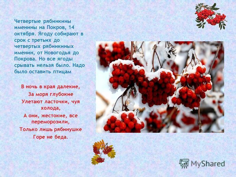 Четвертые рябинкины именины на Покров, 14 октября. Ягоду собирают в срок с третьих до четвертых рябинкиных именин, от Новогодья до Покрова. Но все ягоды срывать нельзя было. Надо было оставить птицам В ночь в края далекие, За моря глубокие Улетают ла