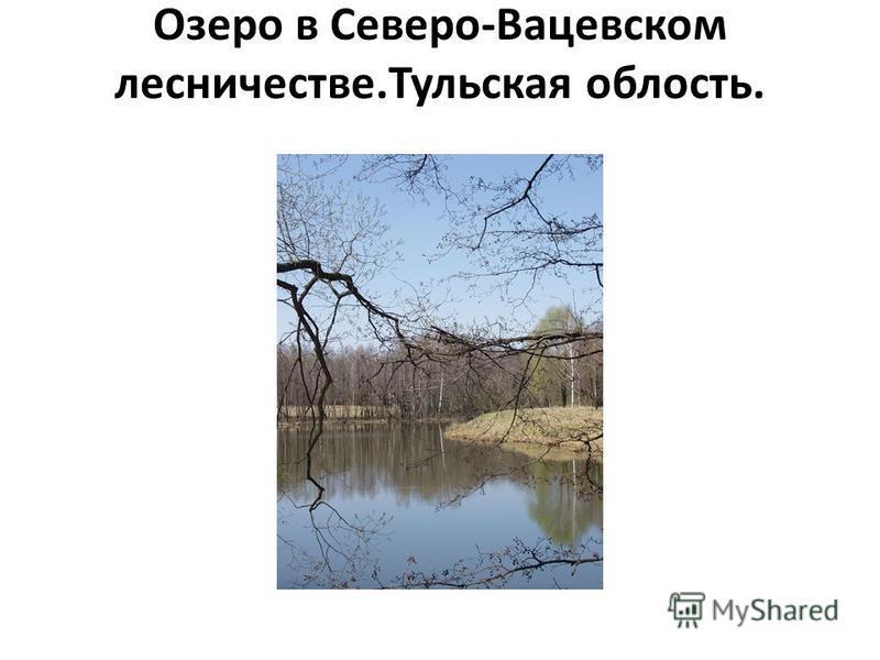 Озеро в Северо-Вацевском лесничестве.Тульская облость.