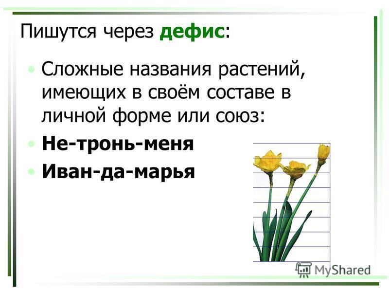 Пишутся через дефис: Сложные названия растений, имеющих в своём составе в личной форме или союз: Не-тронь-меня Иван-да-марья