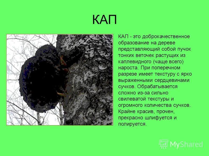 КАП КАП - это доброкачественное образование на дереве представляющий собой пучок тонких веточек растущих из каплевидного (чаще всего) нароста. При поперечном разрезе имеет текстуру с ярко выраженными сердцевинами сучков. Обрабатывается сложно из-за с