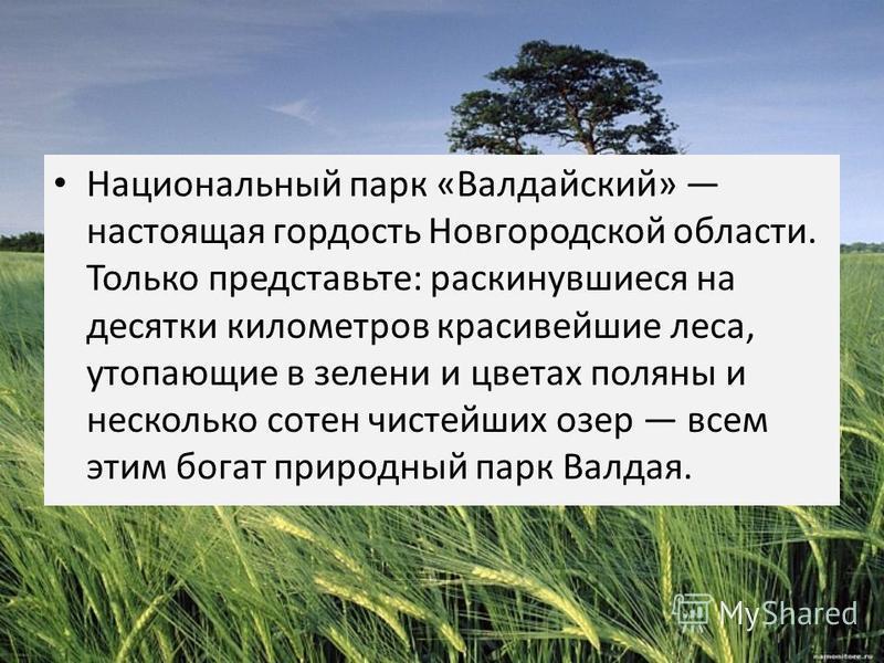 Национальный парк «Валдайский» настоящая гордость Новгородской области. Только представьте: раскинувшиеся на десятки километров красивейшие леса, утопающие в зелени и цветах поляны и несколько сотен чистейших озер всем этим богат природный парк Валда