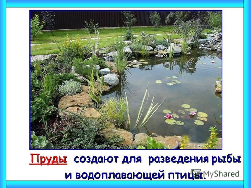 Пруды создают для разведения рыбы Пруды создают для разведения рыбы и водоплавающей птицы. и водоплавающей птицы.