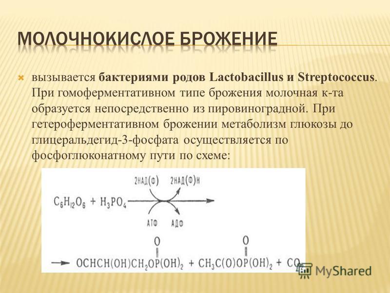 вызывается бактериями родов Lactobacillus и Streptococcus. При гомоферментативном типе брожения молочная к-та образуется непосредственно из пировиноградной. При гетероферментативном брожении метаболизм глюкозы до глицеральдегид-3-фосфата осуществляет