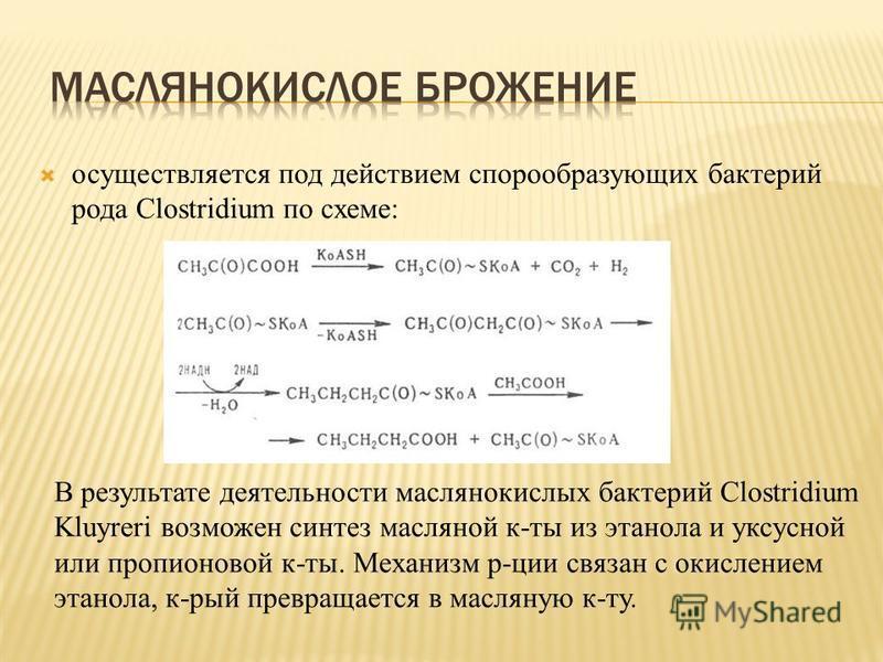 осуществляется под действием спорообразующих бактерий рода Clostridium по схеме: В результате деятельности маслянокислых бактерий Clostridium Kluyreri возможен синтез масляной к-ты из этанола и уксусной или пропионовой к-ты. Механизм рации связан с о
