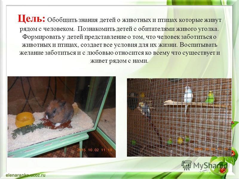 Цель: Обобщить знания детей о животных и птицах которые живут рядом с человеком. Познакомить детей с обитателями живого уголка. Формировать у детей представление о том, что человек заботиться о животных и птицах, создает все условия для их жизни. Вос