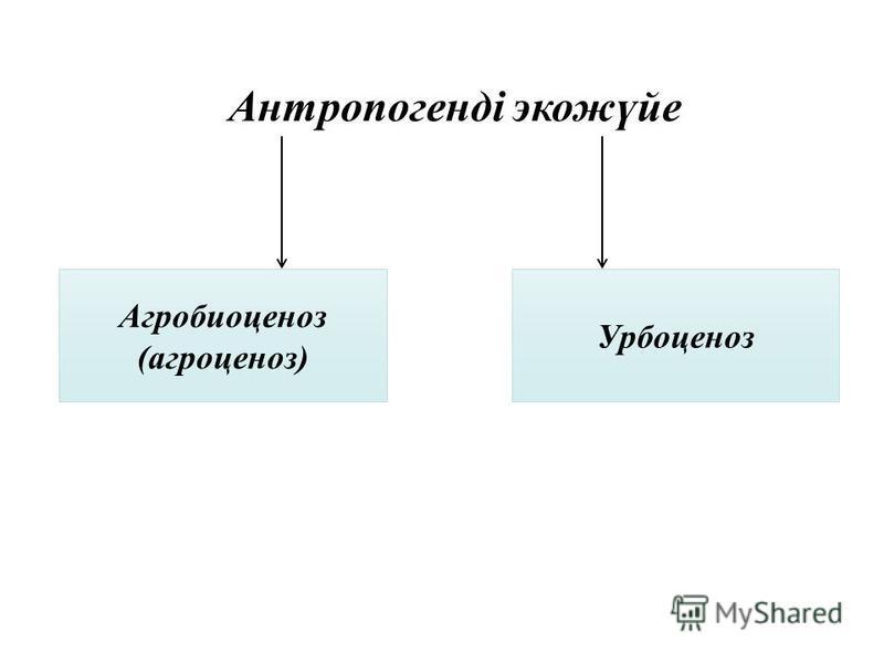 Антропогенді экожүйе Агробиоценоз (агроценоз) Урбоценоз