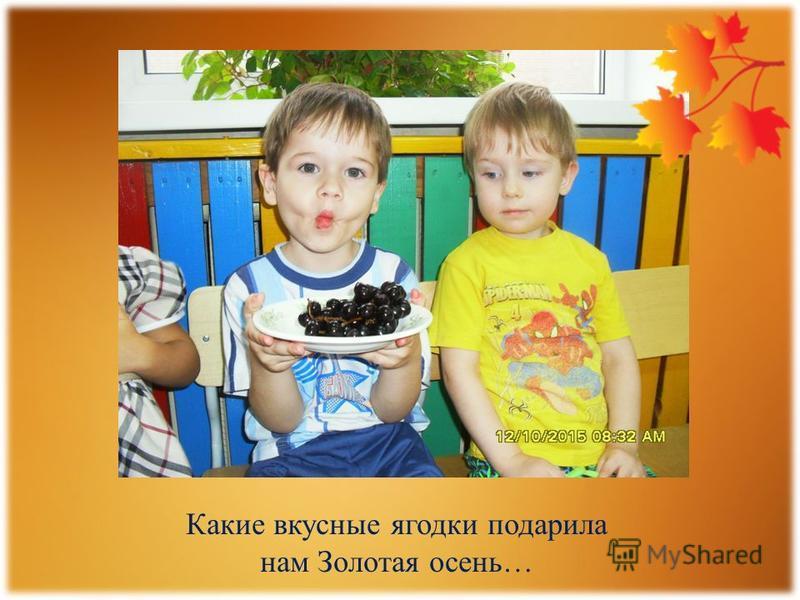 Какие вкусные ягодки подарила нам Золотая осень…