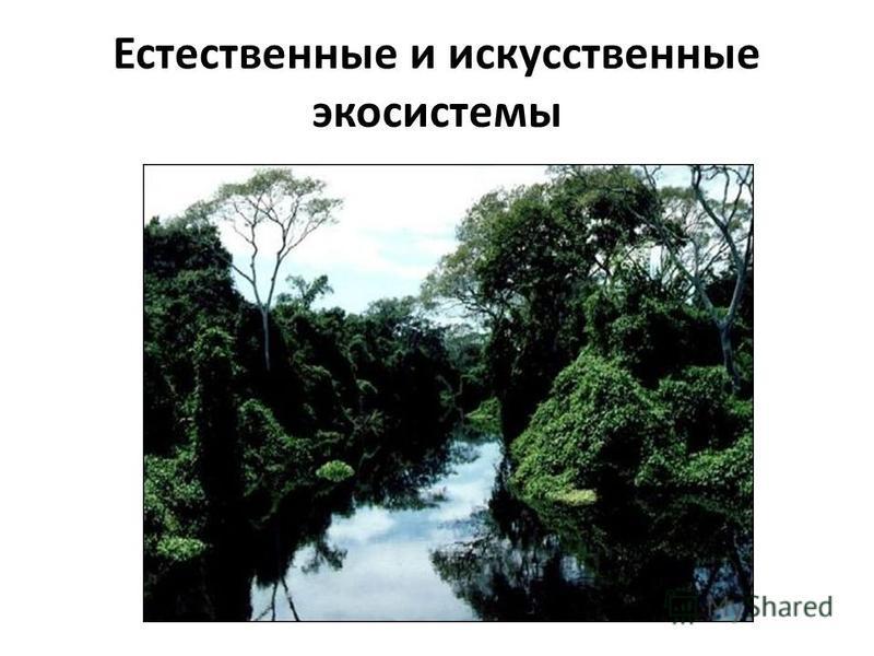 Естественные и искусственные экосистемы