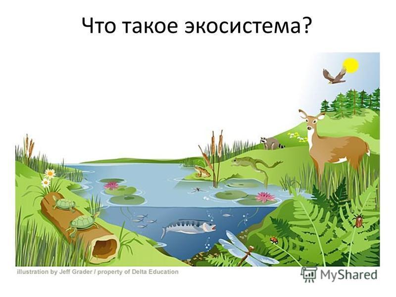 Что такое экосистема?