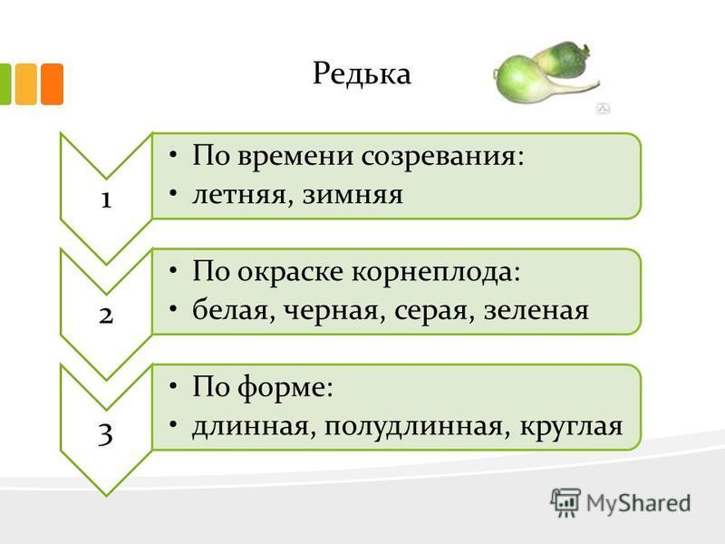 Редька 1 По времени созревания: летняя, зимняя 2 По окраске корнеплода: белая, черная, серая, зеленая 3 По форме: длинная, полудлинная, круглая