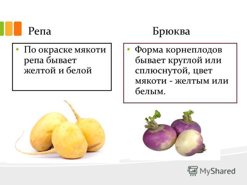 Репа Брюква По окраске мякоти репа бывает желтой и белой Форма корнеплодов бывает круглой или сплюснутой, цвет мякоти - желтым или белым.