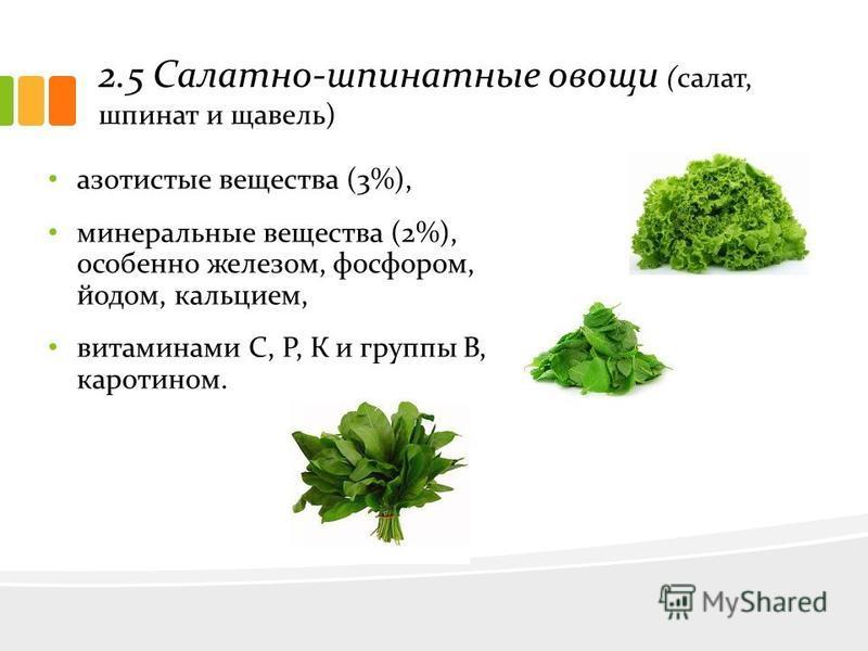 2.5 Салатно-шпинатные овощи (салат, шпинат и щавель) азотистые вещества (3%), минеральные вещества (2%), особенно железом, фосфором, йодом, кальцием, витаминами С, Р, К и группы В, каротином.