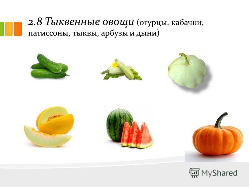 2.8 Тыквенные овощи (огурцы, кабачки, патиссоны, тыквы, арбузы и дыни)