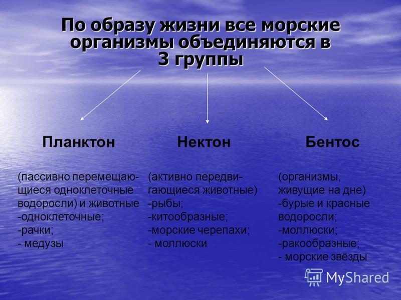 По образу жизни все морские организмы объединяются в 3 группы Планктон (пассивно перемещающиеся одноклеточные водоросли) и животные -одноклеточные; -рачки; - медузы Нектон (активно передвигающиеся животные) -рыбы; -китообразные; -морские черепахи; -