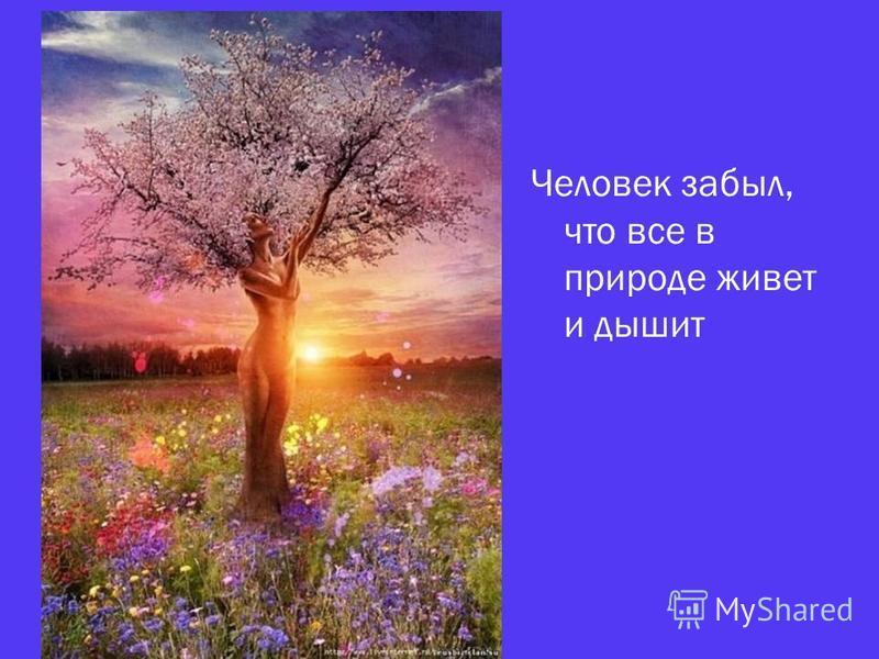 Человек забыл, что все в природе живет и дышит
