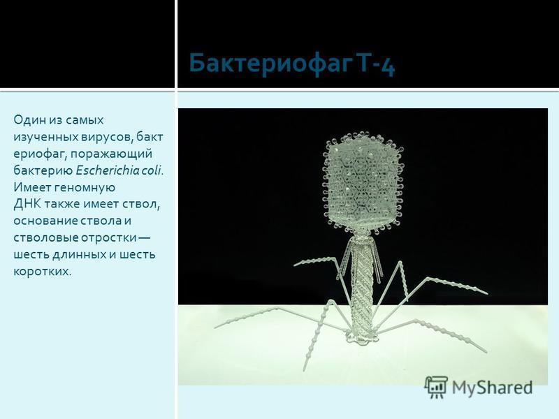 Один из самых изученных вирусов, бактериофаг, поражающий бактерию Escherichia coli. Имеет геномную ДНК также имеет ствол, основание ствола и стволовые отростки шесть длинных и шесть коротких. Бактериофаг T-4