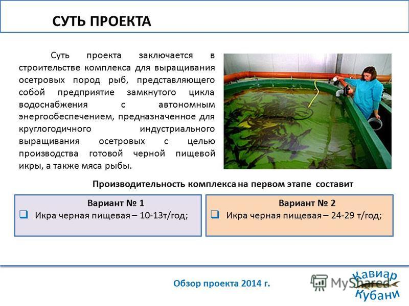 СУТЬ ПРОЕКТА Обзор проекта 2014 г. Суть проекта заключается в строительстве комплекса для выращивания осетровых пород рыб, представляющего собой предприятие замкнутого цикла водоснабжения с автономным энергообеспечением, предназначенное для круглогод