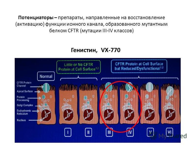 Потенциаторы – препараты, направленные на восстановление (активацию) функции ионного канала, образованного мутантным белком CFTR (мутации III-IV классов) Генистин, VX-770
