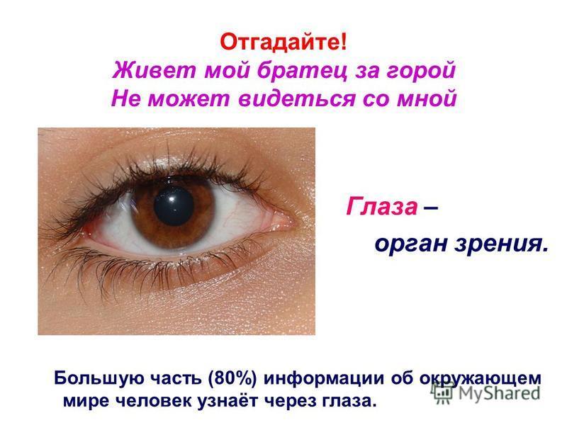 Отгадайте! Живет мой братец за горой Не может видеться со мной Глаза – орган зрения. Большую часть (80%) информации об окружающем мире человек узнаёт через глаза.
