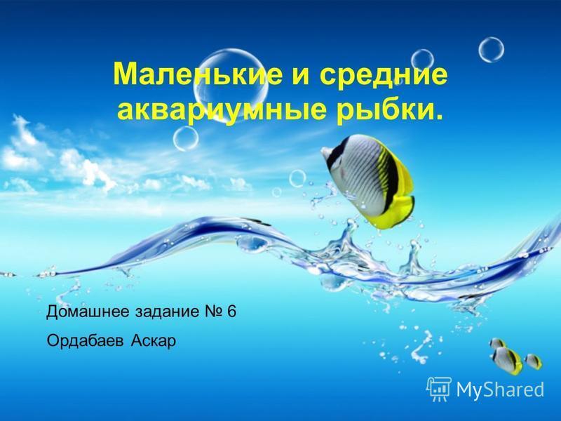 Маленькие и средние аквариумные рыбки. Домашнее задание 6 Ордабаев Аскар