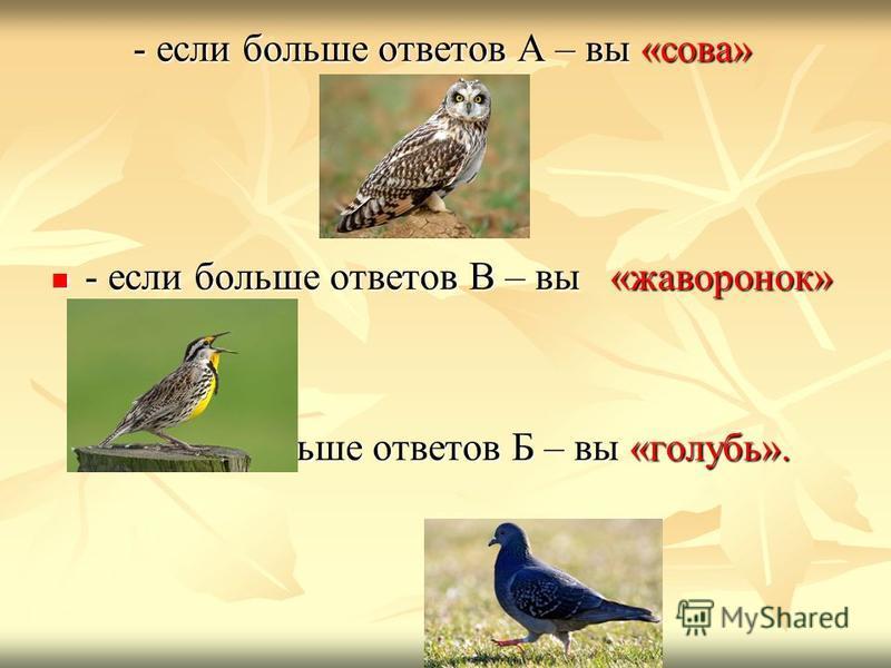 - если больше ответов А – вы «сова» - если больше ответов В – вы «жаворонок» - если больше ответов В – вы «жаворонок» - если больше ответов Б – вы «голубь». - если больше ответов Б – вы «голубь».