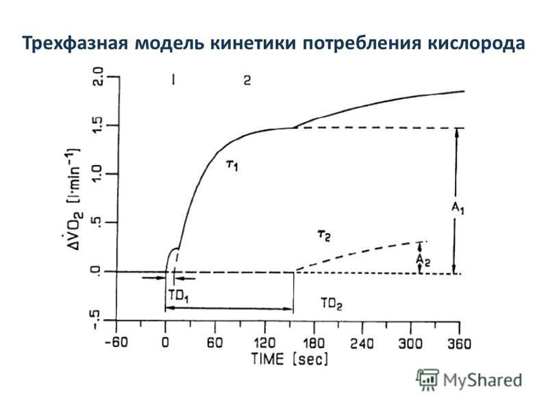 Трехфазная модель кинетики потребления кислорода