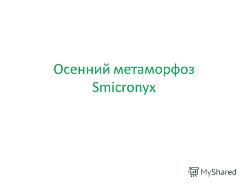 Осенний метаморфоз Smicronyx