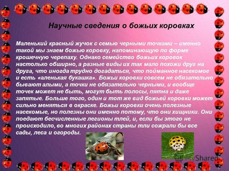 Маленький красный жучок с семью черными точками – именно такой мы знаем божью коровку, напоминающую по форме крошечную черепаху. Однако семейство божьих коровок настолько обширно, а разные виды их так мало похожи друг на друга, что иногда трудно дога