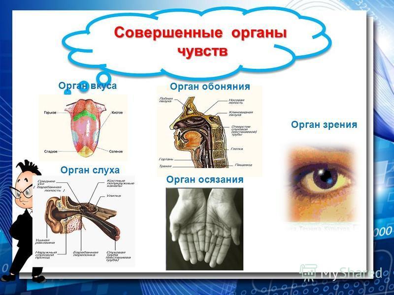 Совершенные органы чувств Орган вкуса Орган обоняния Орган зрения Орган слуха Орган осязания
