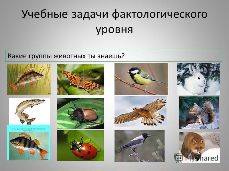 Учебные задачи фактологического уровня Какие группы животных ты знаешь? рыбы насекомые птицы звери
