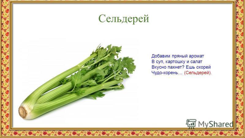Сельдерей Добавим пряный аромат В суп, картошку и салат Вкусно пахнет? Ешь скорей Чудо-корень… (Сельдерей).