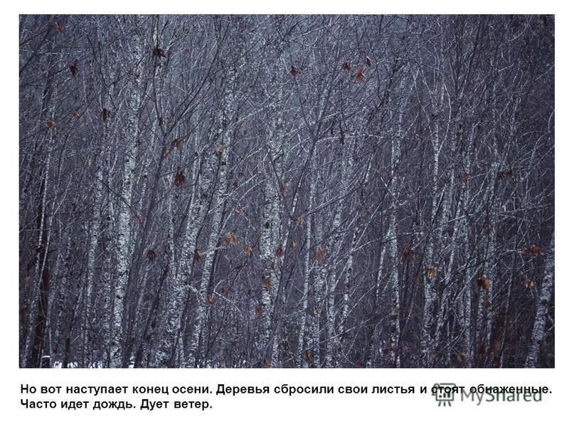 Но вот наступает конец осени. Деревья сбросили свои листья и стоят обнаженные. Часто идет дождь. Дует ветер.
