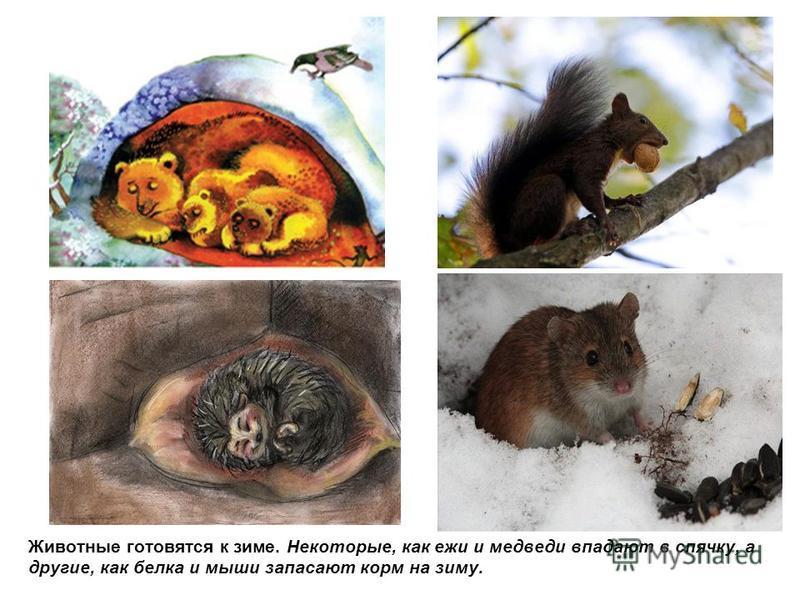 Животные готовятся к зиме. Некоторые, как ежи и медведи впадают в спячку, а другие, как белка и мыши запасают корм на зиму.