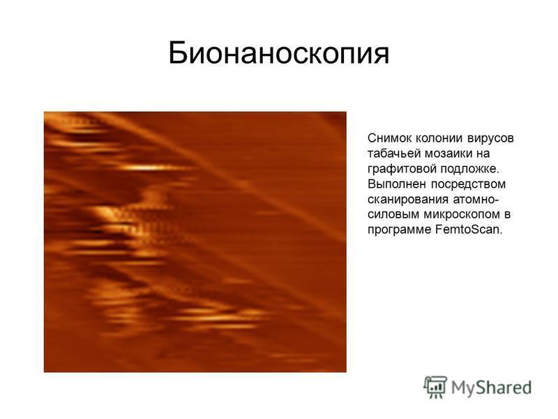 Бионаноскопия Снимок колонии вирусов табачьей мозаики на графитовой подложке. Выполнен посредством сканирования атомно- силовым микроскопом в программе FemtoScan.