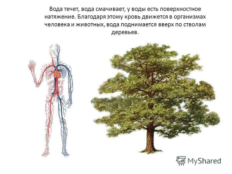 Вода течет, вода смачивает, у воды есть поверхностное натяжение. Благодаря этому кровь движется в организмах человека и животных, вода поднимается вверх по стволам деревьев.