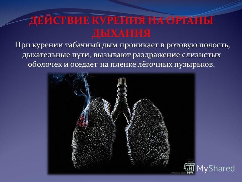 ДЕЙСТВИЕ КУРЕНИЯ НА ОРГАНЫ ДЫХАНИЯ При курении табачный дым проникает в ротовую полость, дыхательные пути, вызывают раздражение слизистых оболочек и оседает на пленке лёгочных пузырьков.