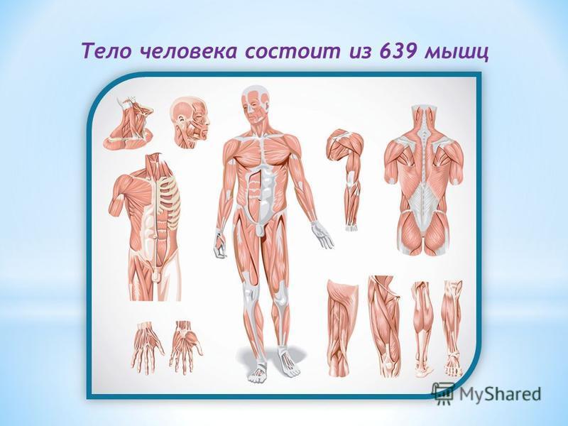 Тело человека состоит из 639 мышц