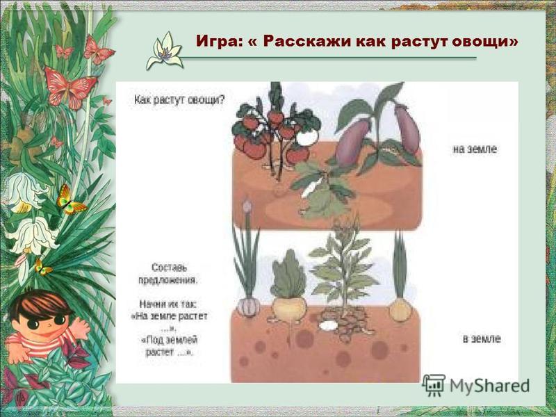 Игра: « Расскажи как растут овощи»