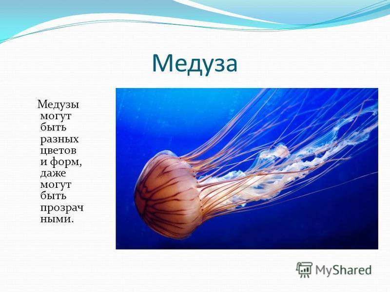 Медуза Медузы могут быть разных цветов и форм, даже могут быть прозрачными.