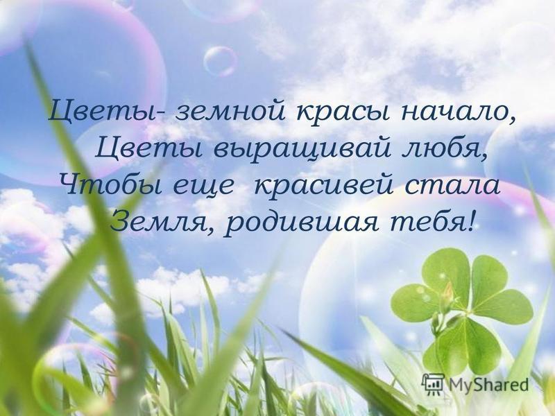 Цветы- земной красы начало, Цветы выращивай любя, Чтобы еще красивей стала Земля, родившая тебя!
