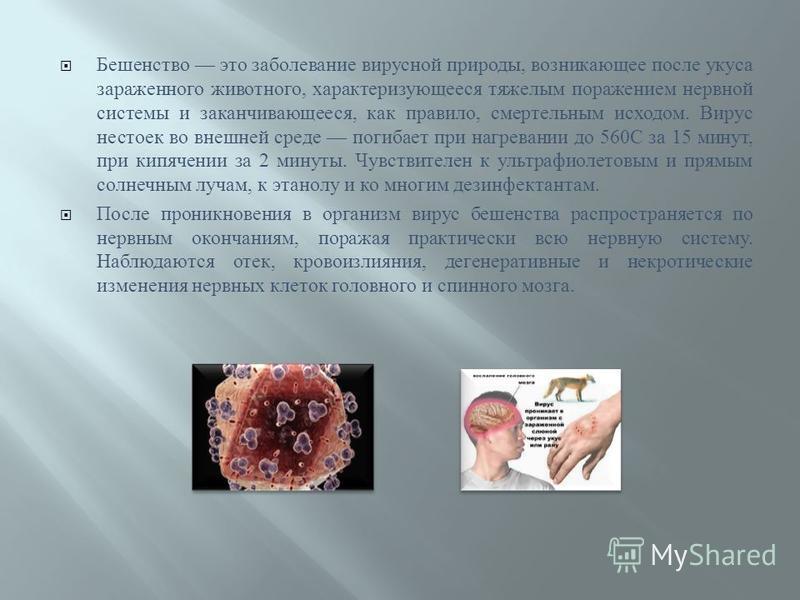 Бешенство это заболевание вирусной природы, возникающее после укуса зараженного животного, характеризующееся тяжелым поражением нервной системы и заканчивающееся, как правило, смертельным исходом. Вирус нестоек во внешней среде погибает при нагревани